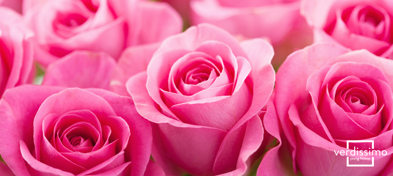 The Meaning Of Pink Roses Their Uses And Varieties Verdissimo