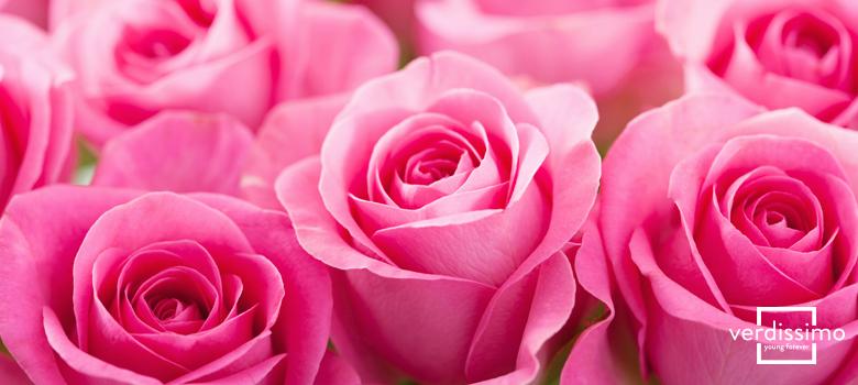 La signification des roses roses, leurs utilisations et variétés - Verdissimo