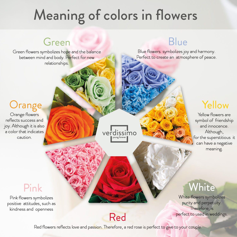 infografia significado de las rosas segun color en - verdissimo