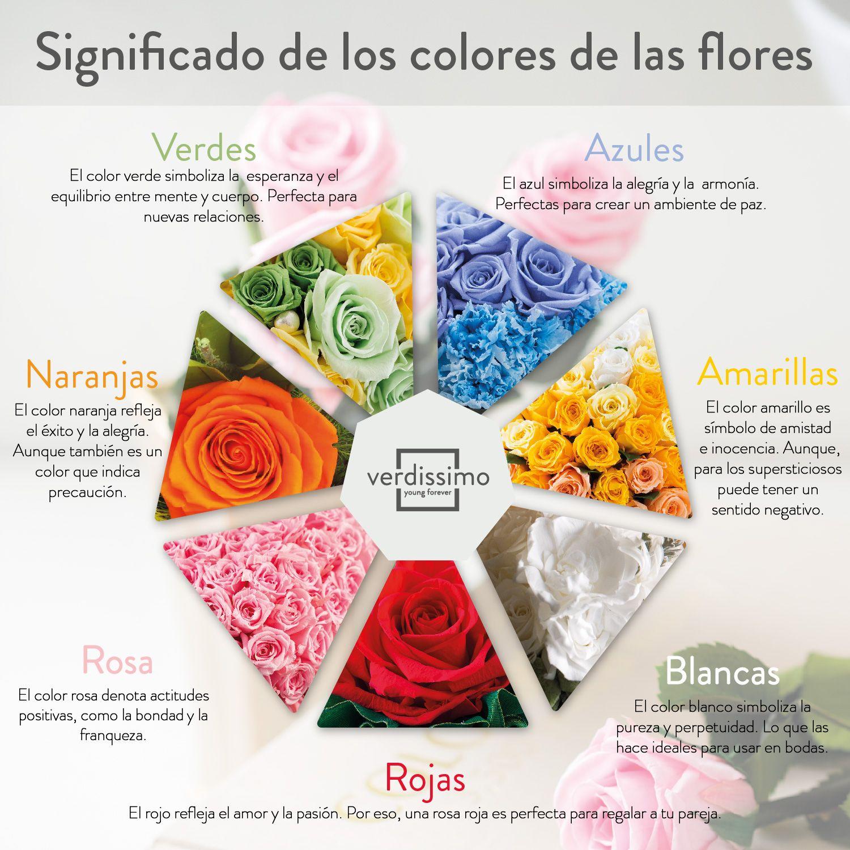 infografia significado de las rosas segun color es - verdissimo