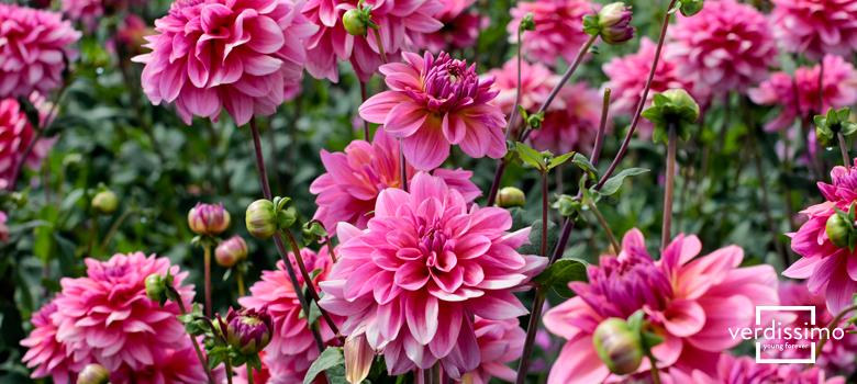 las-plantas-y-flores-tipicas-del-continente-americano-verdissimo