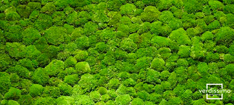 Verdissimo S Best Preserved Moss Decoration Projects