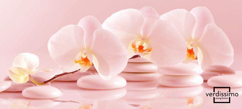 93c547c64e3dc Encontrar orquídeas naturales fuera de su hábitat natural es difícil. Para  no privarnos de su belleza