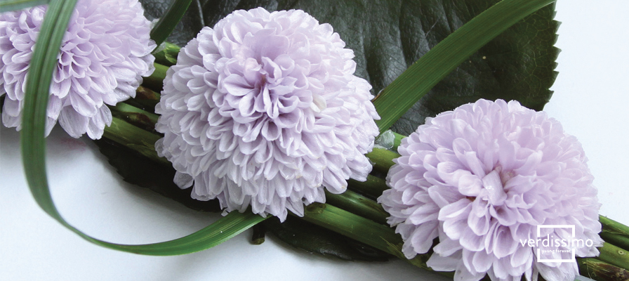 Dites-le-lui avec des fleurs… Signification du chrysanthème - Verdissimo