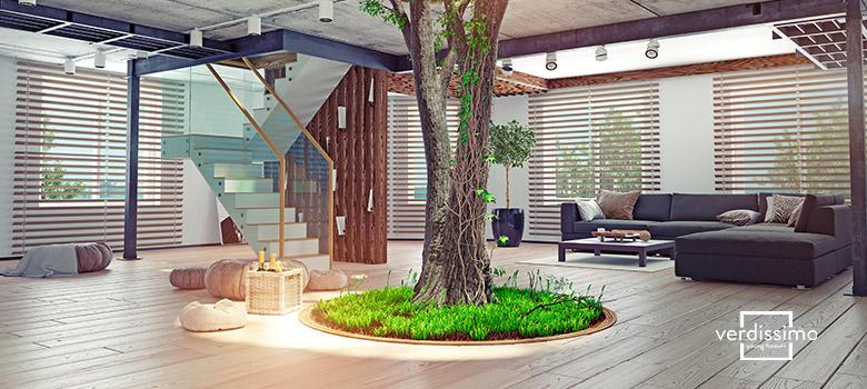 arboles plantas interior - verdissimo
