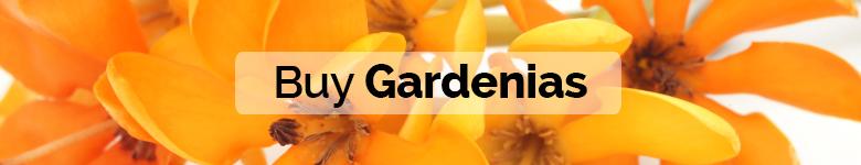 banner significado gardenia ING - verdissimo