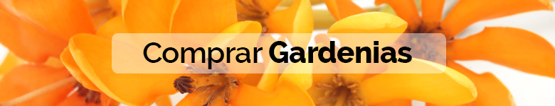 banner significado gardenia - verdissimo