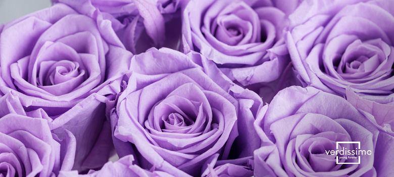 Meaning behind the lilac rose - Verdissimo