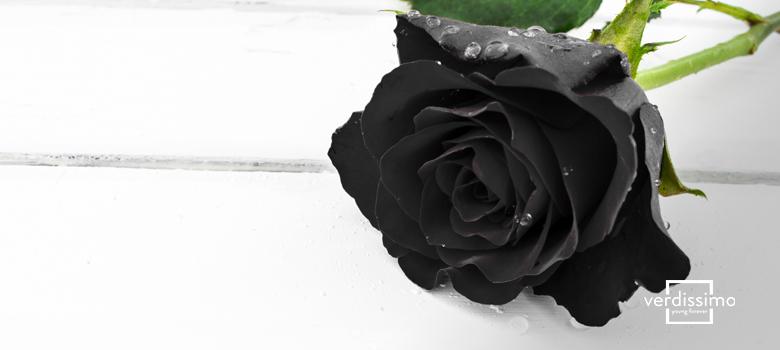 Significado de la rosa negra - Verdissimo