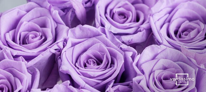 Bedeutung der lilafarbenen Rose - Verdissimo