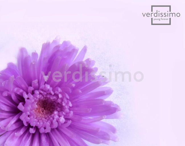 crisantemos - verdissimo