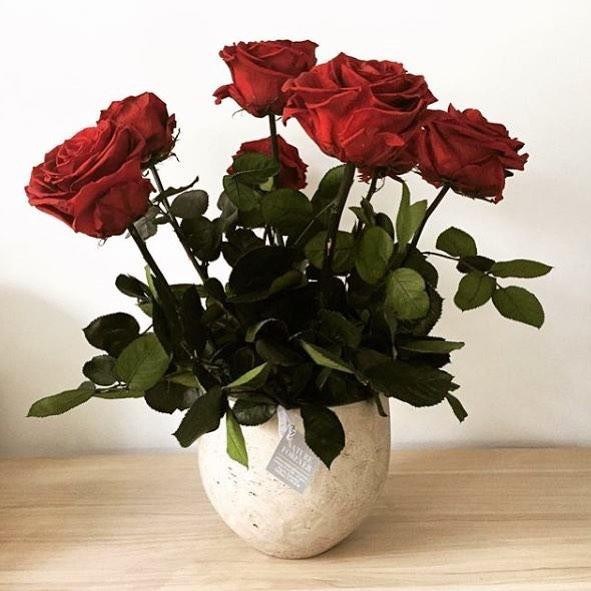 rosas - verdissimo