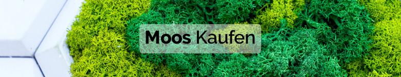 Banner musgo preservado aleman - verdissimo