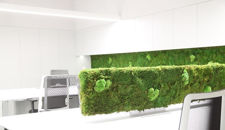 Panneaux séparateurs en mousse ou en lichen - Verdissimo
