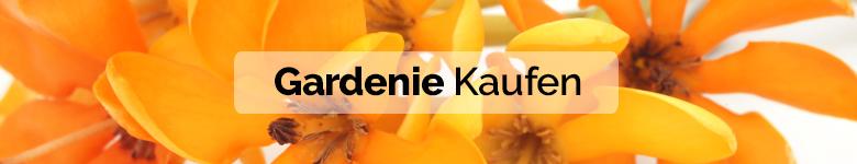 banner gardenias DE - verdissimo