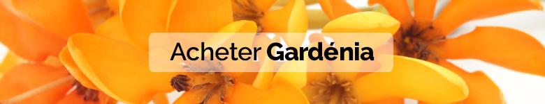 banner gardenias FR - verdissimo