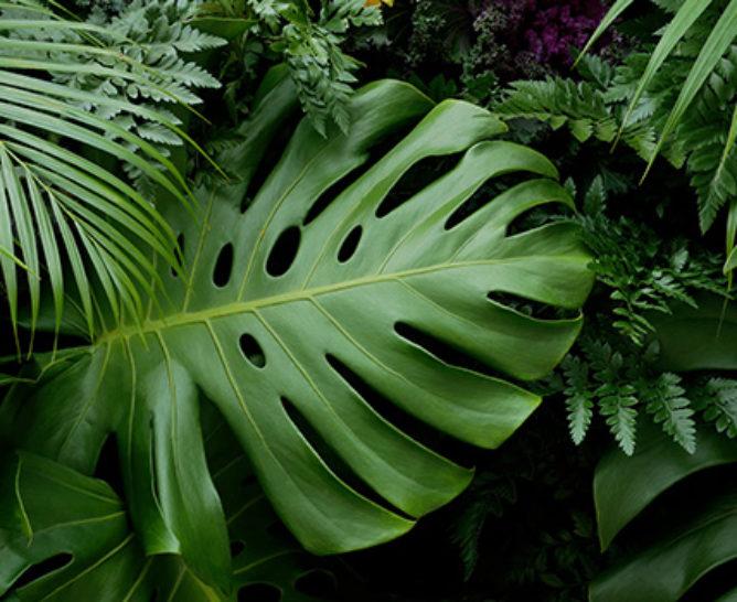 Comment stabiliser les feuilles ? - Verdissimo