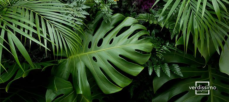 como preservar hojas - verdissimo