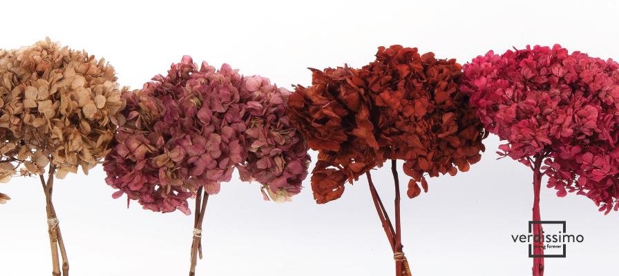 verdissimo le plus grand producteur en gros de fleurs stabilisees - verdissimo