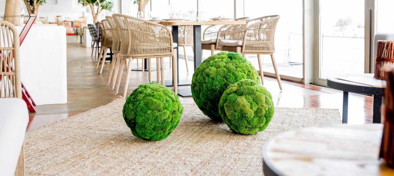 Moss Balls - Verdissimo