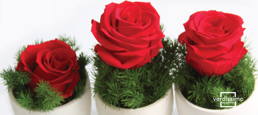Où peut-on acheter des fleurs stabilisées de grande qualité ? - Verdissimo