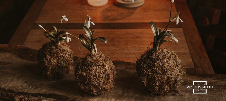 Kokedama – Todo sobre este arte floral - Verdissimo