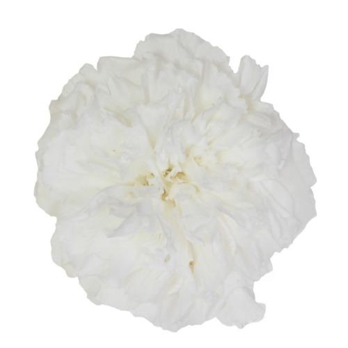 claveles mejores arreglos florales - verdissimo