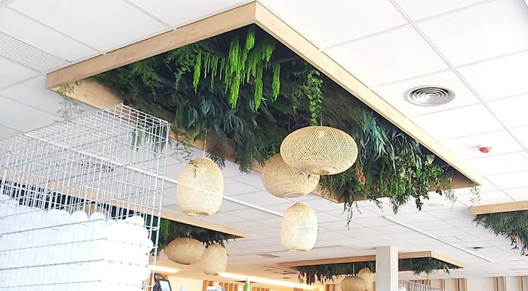Decoración de techos con Verdes - Verdissimo