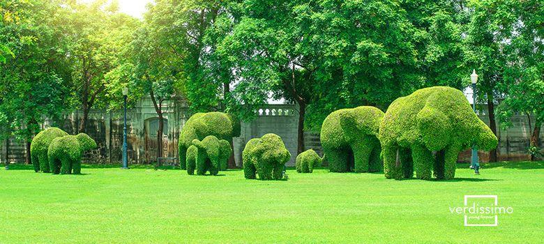decoracion con topiarios y preservado - verdissimo