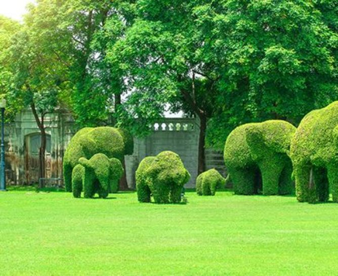 Decoration with preserved topiary - Verdissimo