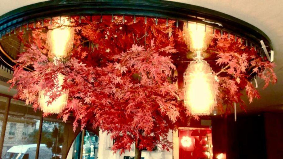 arboles plantas interior img1 - verdissimo
