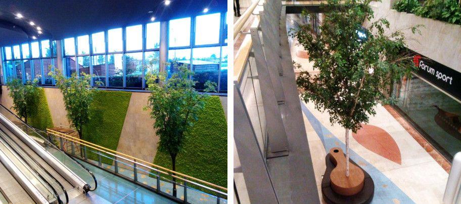 arboles plantas interior img3 - verdissimo