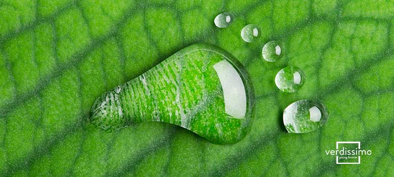 los registros de huella de carbono en plantas preservadas - verdissimo