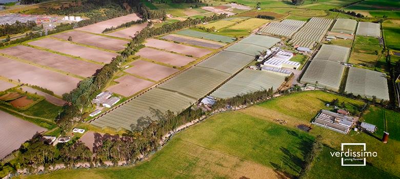 nuestros cultivos en el mundo y por que estan repartidos asi - verdissimo