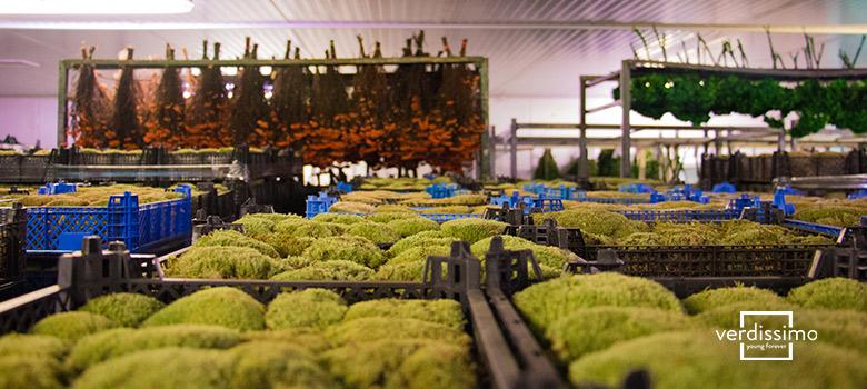 como funciona la distribucion de las flores preservadas - verdissimo