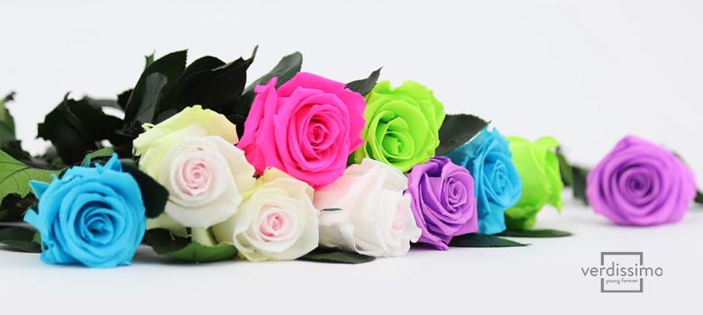Roses with stem, new colors! - Verdissimo