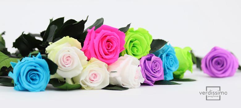 Flores preservadas de Verdissimo