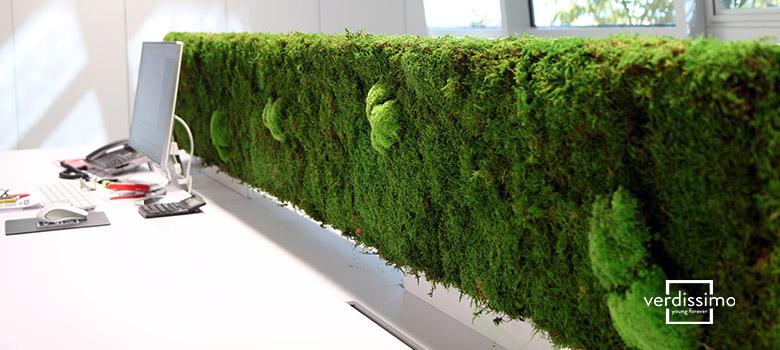 Panneaux séparateurs en mousse et en lichen - Verdissimo