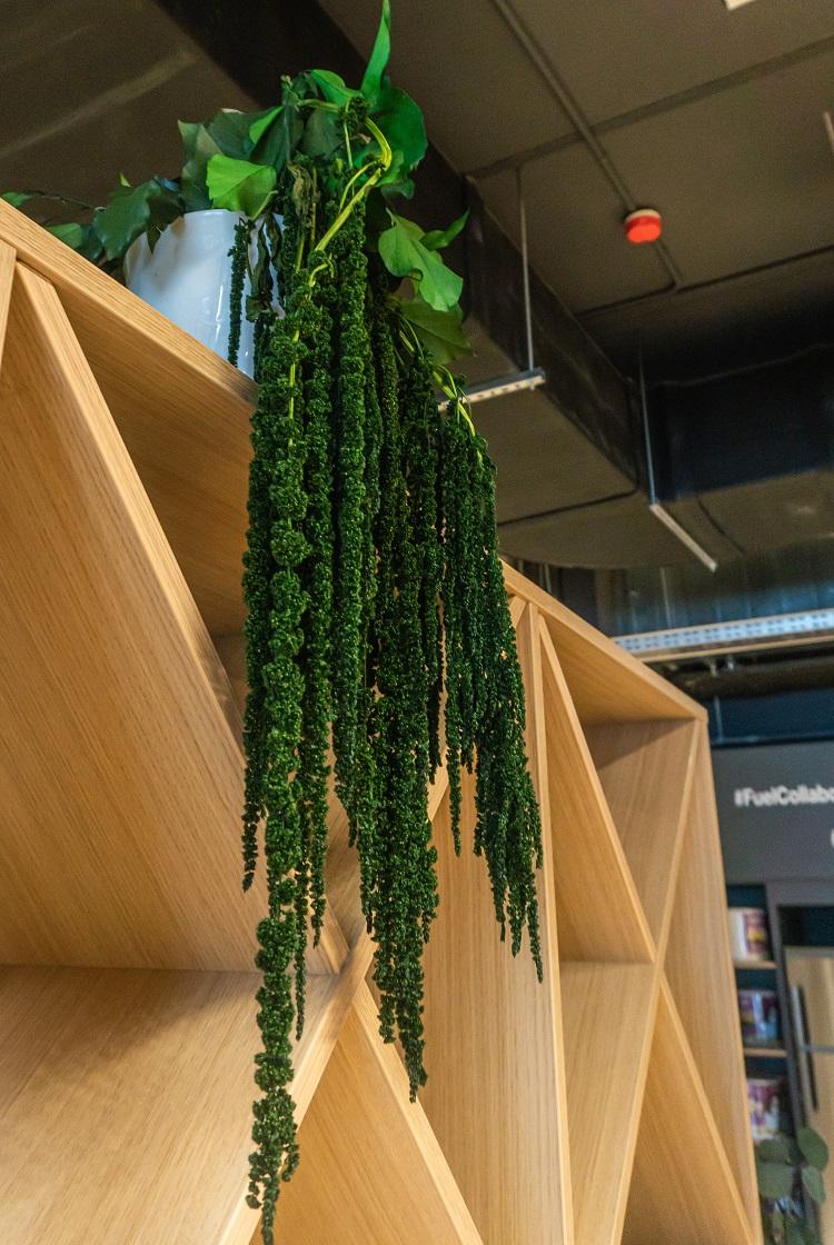 Éléments de suspension - décoration de magasin - verdissimo