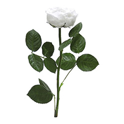 Rosa con tallo Jardín - Verdissimo