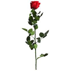 Rosa con tallo Standard - Verdissimo
