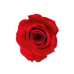 Rosa Mini - Verdissimo