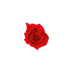 Rosa Princess - Verdissimo