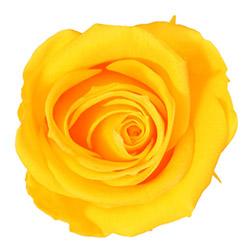 Cabeza Rosa - Rosa sin Tallo - Verdissimo