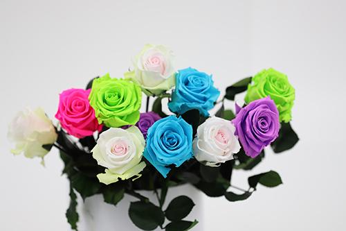 Roses colorees avec tige - Verdissimo