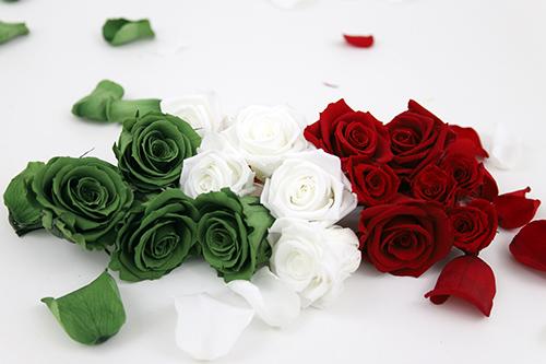 roses-italy-verdissimo