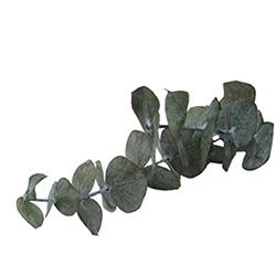 Eucalipto preservado - Verdissimo