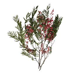 Árbol de pimienta preservado - Verdissimo