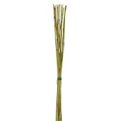 Elephant reed preservado - Verdissimo