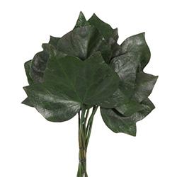 Ivy preservado - Verdissimo